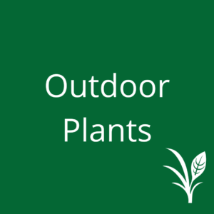 Outdoor Plants & Miscellaneous